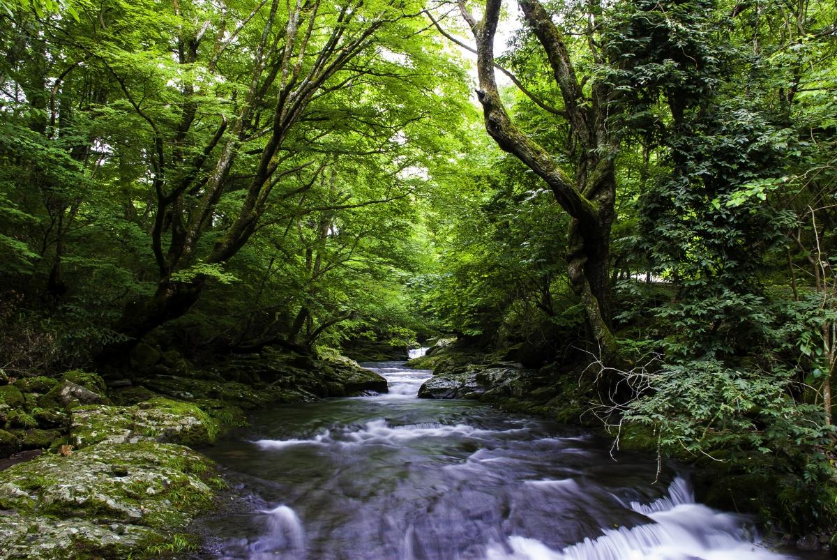 滝という恵み